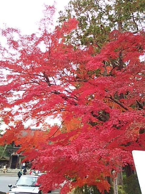 三井寺の紅葉