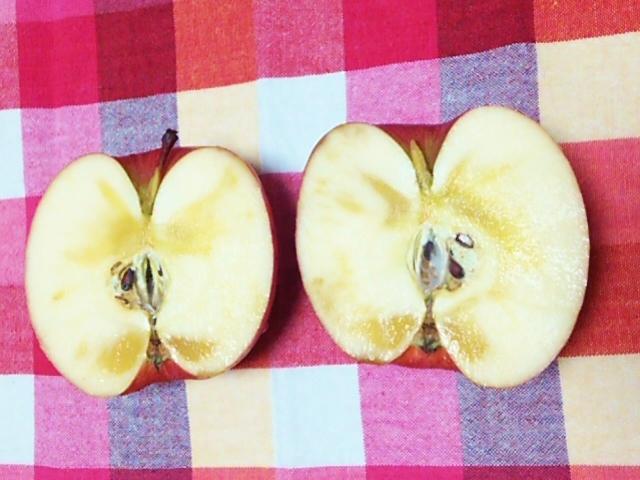 弘前市のリンゴ