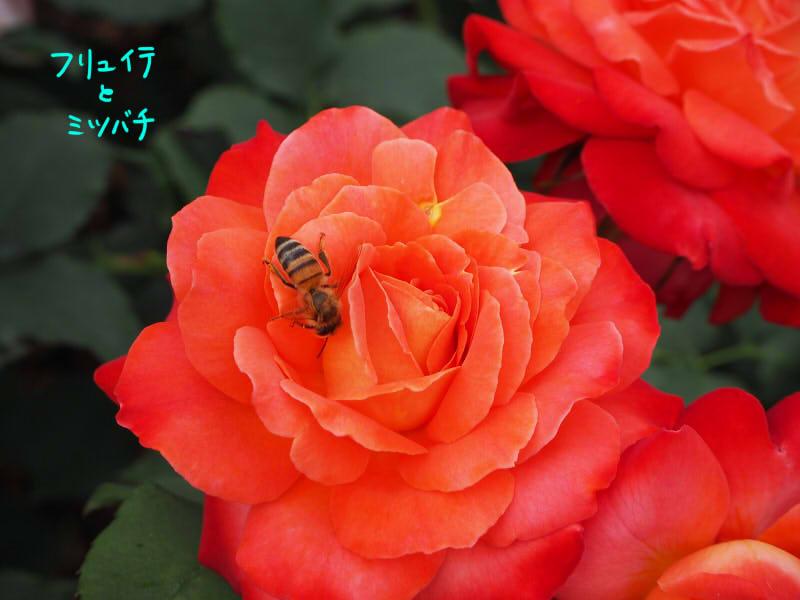 フリュイテ&ミツバチ