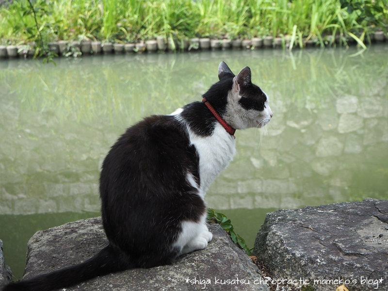猫と八幡堀