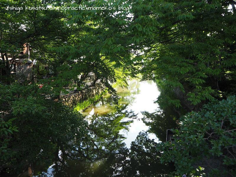 葉桜と八幡堀