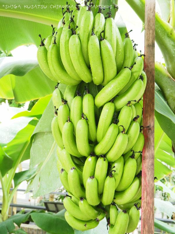 バナナアップ