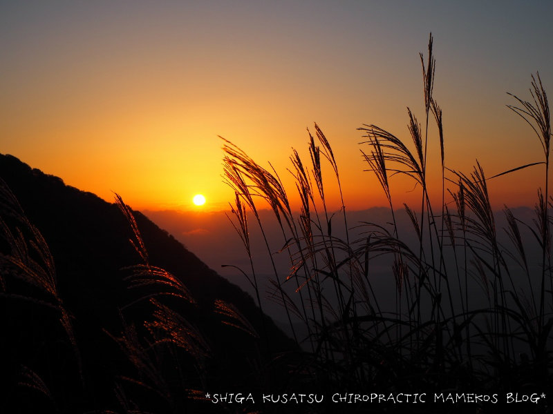 夕日に照るススキ
