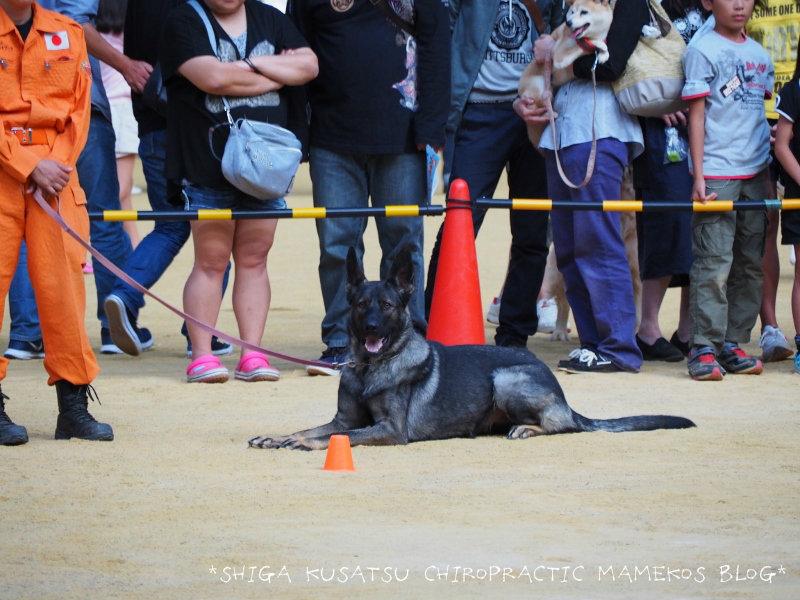 災害救助犬1