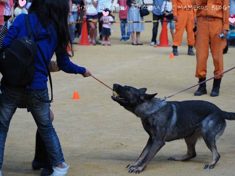 災害救助犬3