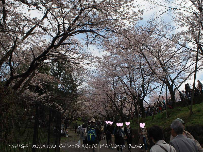 インクライン桜2