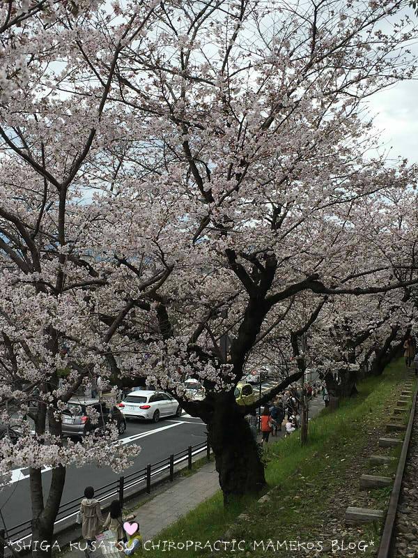 インクライン桜3