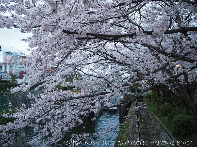琵琶湖疎水3