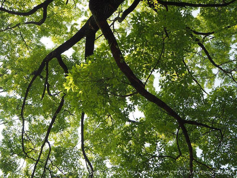 大きな楠の木の下で